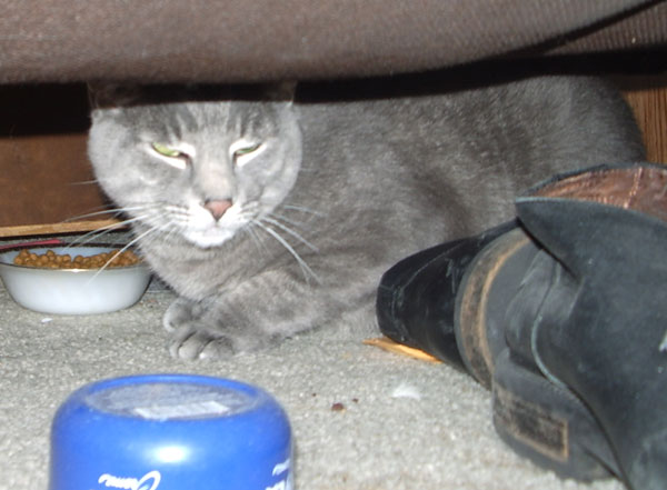 Khan hiding under the couch