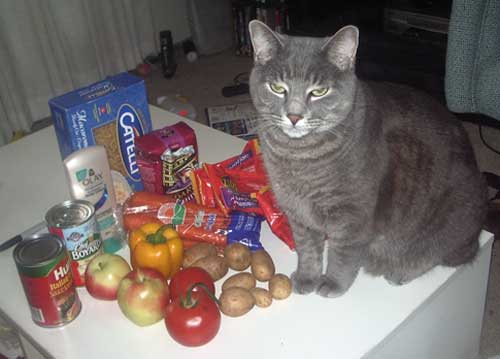 Khan guards the food I got from the food bank
