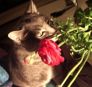 Khan eating a flower