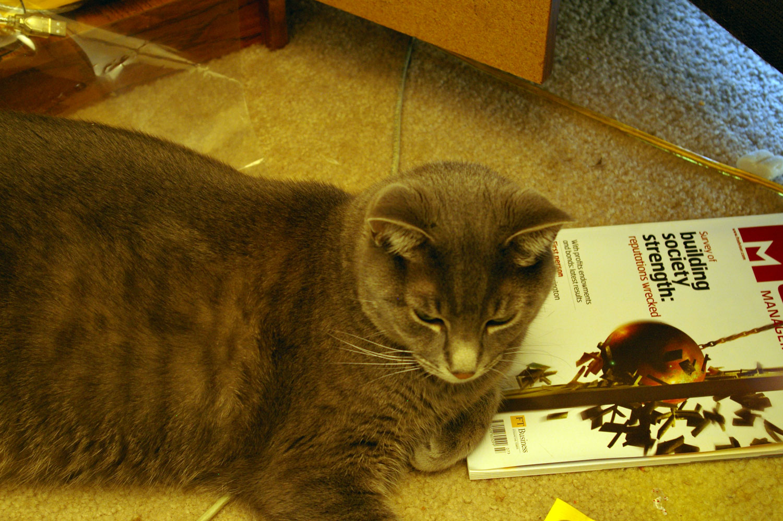 Cat on magazine