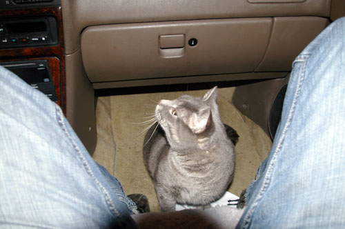 Khan retreats to safety beneath the glove compartment