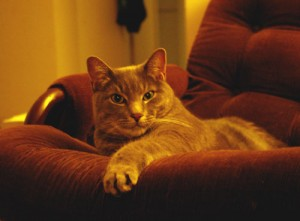Khan on Couch
