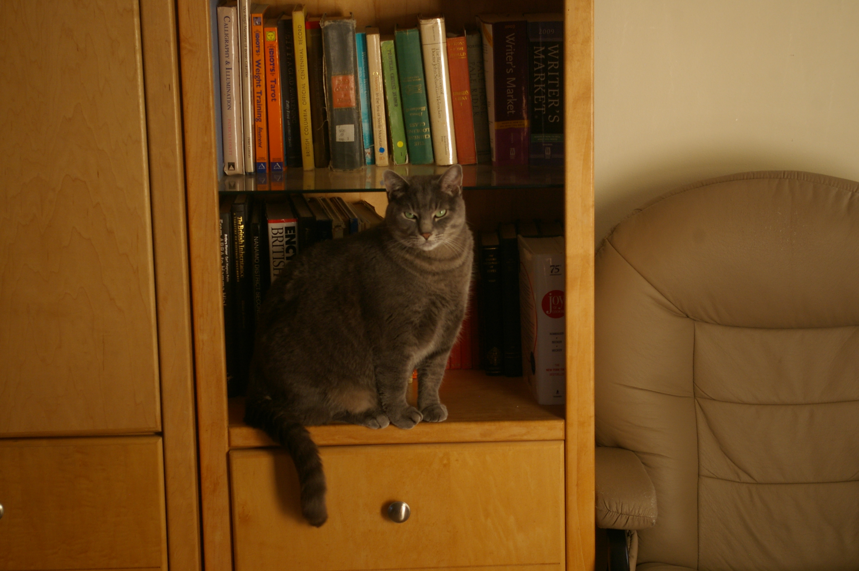 My cat Khan on the bookshelf