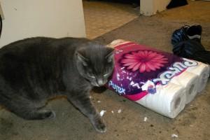 Cat versus toilet paper