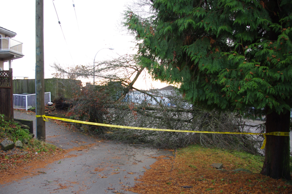 Burnaby tree knocked over during storm