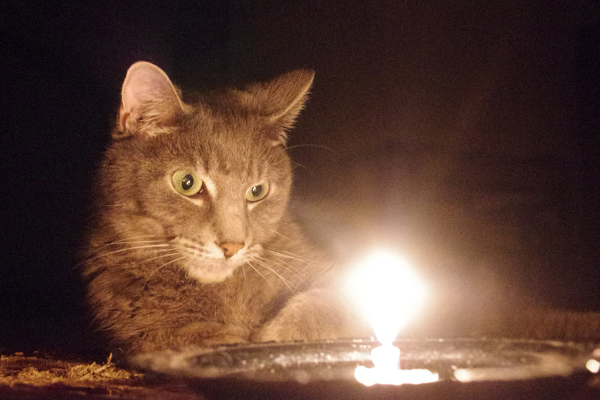 Khan looking at a candle