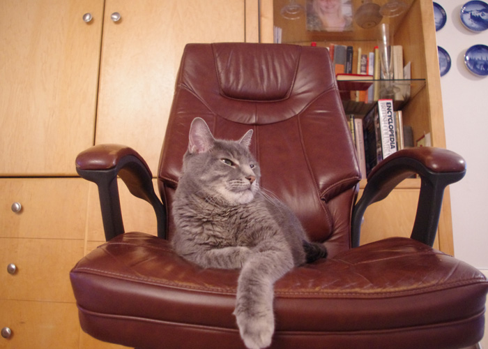 Khan sitting on a leather chair that only lasted four months.