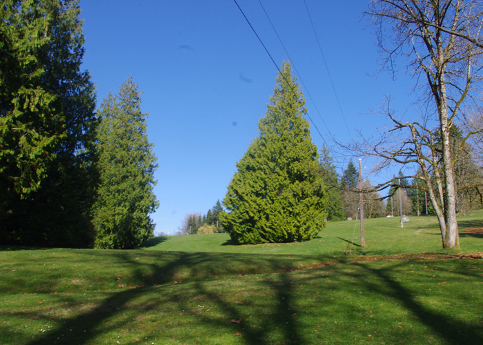 Centennial Park on Burnaby Mountain.