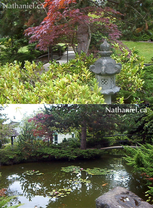 This is the Tamagawa Gardens at Malaspina University-College in 2004. This beautiful and tranquil space was built as a gift for the school by Tamagawa University in Machida, Tokyo, Japan. When I was a child I used to come up here to read, write, draw or just sit and reflect on my life and the future. I still make a point of returning to this spot whenever I visit Nanaimo.