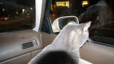 Khan goes for a car ride.